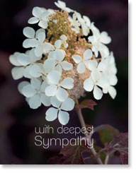 WITH DEEPEST SYMPATHY PETITE