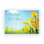 DAFFODILS PACK OF 4