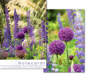 ALIUM HEADS NOTELETS PACK OF 10