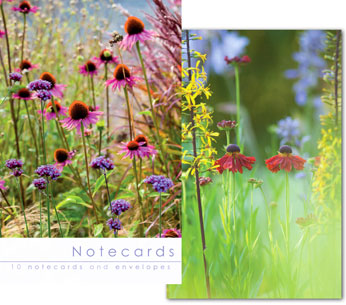 ECHINACEA FLOWER BEDS NOTELETS PACK OF 10