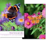 BUTTERFLY NOTELETS PACK OF 10
